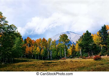 Autumn Storm Clouds - Gold leaved aspen trees still shine...