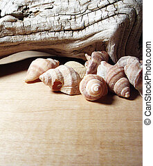 sea shell driftwood - a background of natural textures sea...