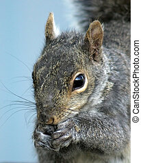 The Nibbler - Squirrel tight ninnling