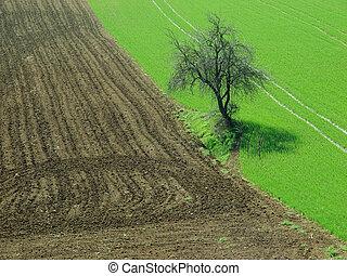 tree in the fields