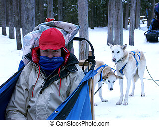 dog sledding - Man sitting in dog sled