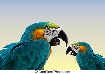 MACAW PARROTS - Two macaw parrots (same bird) done in...