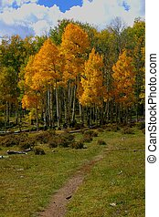 Autumn Trail - Rainbow Trail winds through many aspen groves...