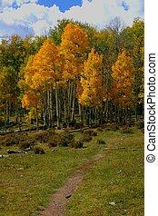 Autumn Trail - Rainbow Trail winds through many aspen groves...