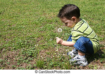 Boy Dandelions - Toddler boy in green shirt and shorts...