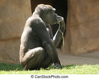 The thinker - Gorilla thinking