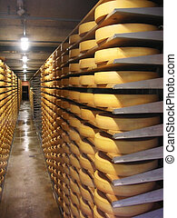 cheese warehouse - Stacks of cheese in a cheese factory in...