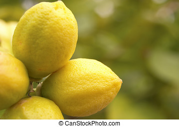 lemon - Fresh lemons