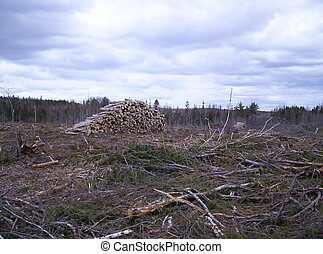 logging pile of logs and land that was  clearcut
