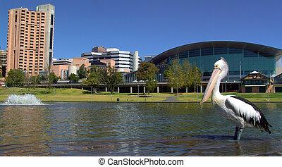 Panoramic Pelican - Panoramic shot of Pelican in front of...