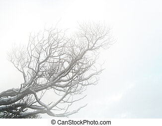 Lop in mist - Some tree lop in mist, winter time