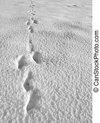 Hare footprint - Detail of hare footprint on snow