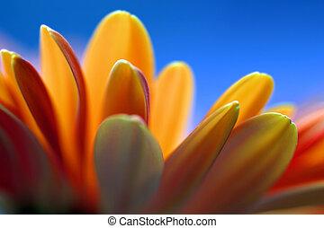 Backlit Flower - Backlit flower against a blue background