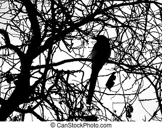 pájaro, árbol