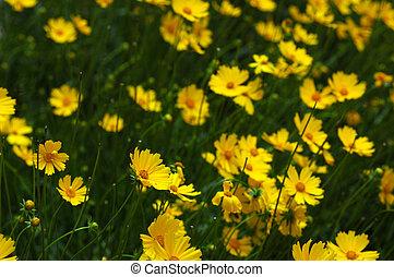 Yellow III - yellow