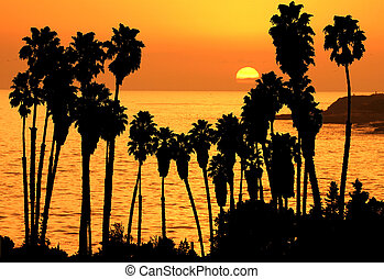 sunset palms - palms silhouettes in sunset