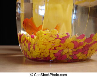 Fish Bowl - This is a picture of a fishbowl with a goldfish...