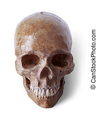 Skull 3 (path included) - Fake halloween skull. Path...