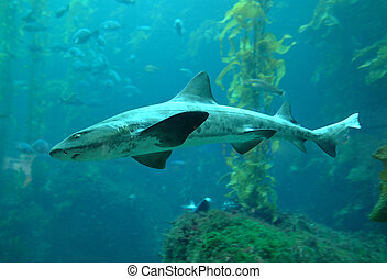 Shark - High resolution image of a shark