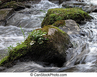 River Detail - Detail of a mountain stream in a forest