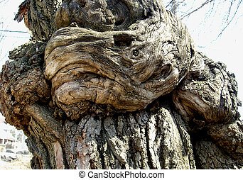 Wooden Fist 1 - The structure of the tree is looking like a...