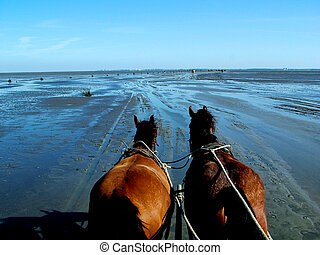Horses and low tide - Digital photo of horses walking at the...