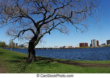 fiume, albero