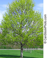 Spring Has Sprung - Beautiful tree with spring blooms in...