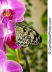 Butterfly - An exotic butterfly on an orchid