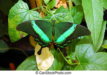 Exotic butterfly. - An very colorful exotic butterfly.