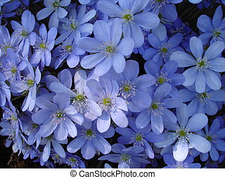 azure - blue flowers