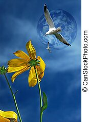 Daisy and seagull. - A digital compilation off some off my...
