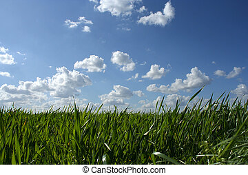 Grass and cloudy sky - Scenic picture of grass with blue...