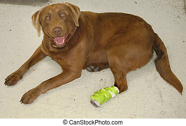 A Hurt Dog - Dog with bandaged foot.