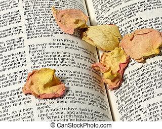 Religion theme verse - Ecclesiastes Bible verse religious...