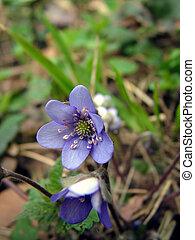 Violet flower 1