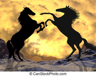 Fighting stallions - Stallions rearing to fight silhouetted...