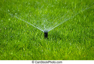 Lawn Sprinkler - Photo of a Lawn Sprinkler