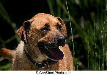Rio, cão, 2