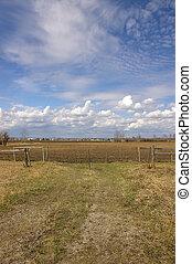 Field & Blue Sky