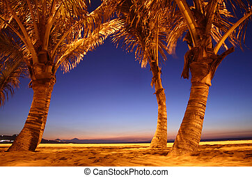 Night Beach - Backlit palms on the beach after dark