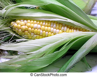maíz, en, el, Mazorca