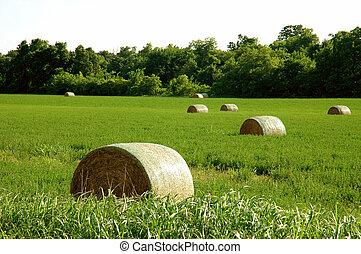 Hay Bundles - Hay bundles in green fields