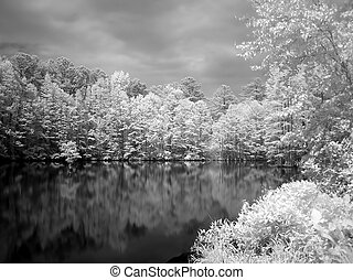 Dream Lake - A park lake with cypress trees in infrared...
