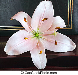 pink lily set against a wedding album