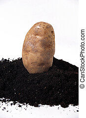 dirt potato - ground vegetables potato