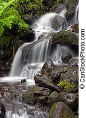 Small tropical water - Another peaceful tropical waterfall.