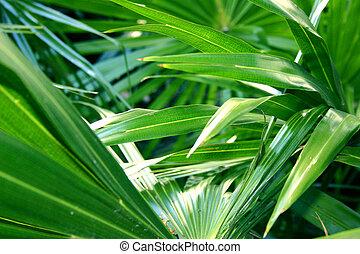 Tropical Foliage - Green tropical foliage