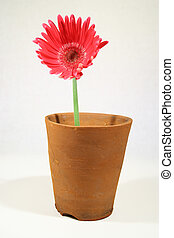 A pot plant - A flower in a plant pot