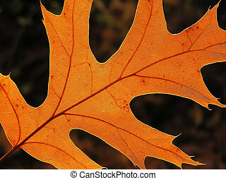 Orange leaf - A close-up of an orange fall leaf